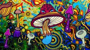 cogumelos magicos